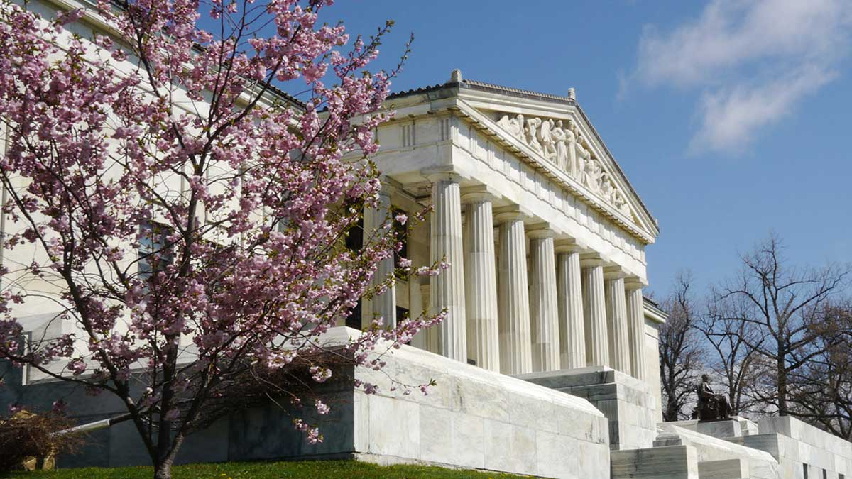 Cherry blossoms outside the Buffalo History Museum