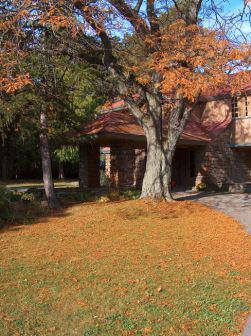 Autumn-Tree-at-Graycliff-081019-TG0.jpg