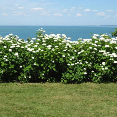 Bushes-in-flower-with-lake-good-110714-RH-copy0.jpg