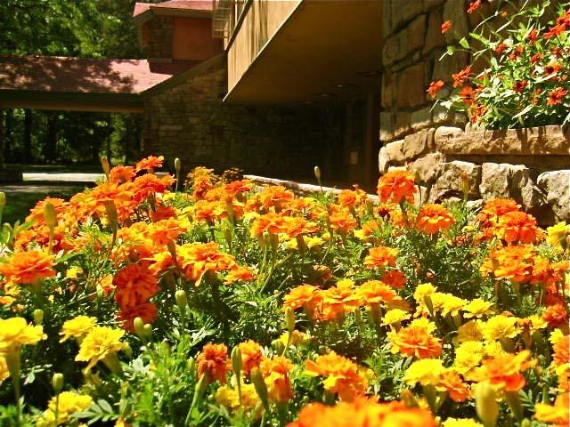 marigolds1.jpg