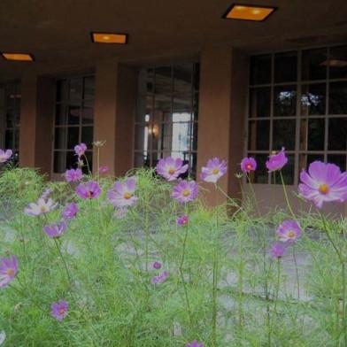 purple-flowers0.jpg