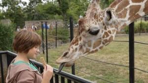 preview-Zoo-giraffe