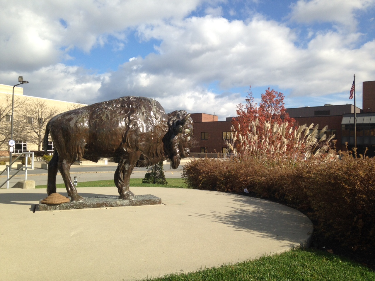 As a statue. This bison is outside the University at Buffalo's North Campus, in front of its Center For the Arts.