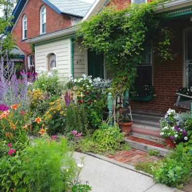 House garden in the summer