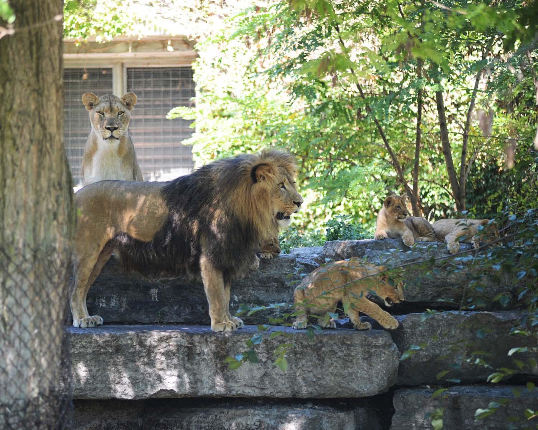 LionsFeature