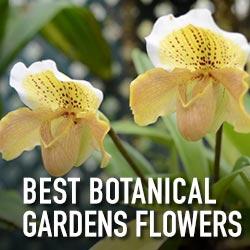 botanical-gardens-flowers-square