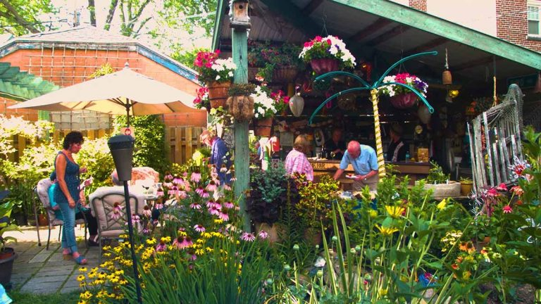 Bird Avenue garden
