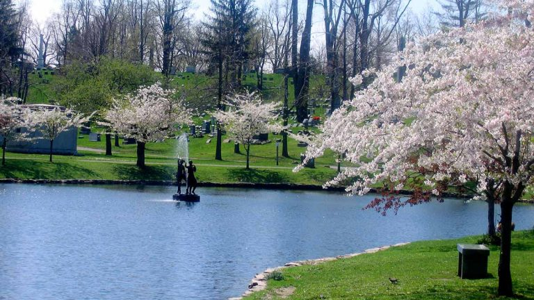 Forest Lawn in spring