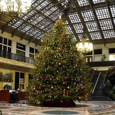 The Ellicott Square Building (295 Main St.) features a giant Christmas tree in its atrium.