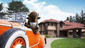 The Unexpected Buffalo riding in a car