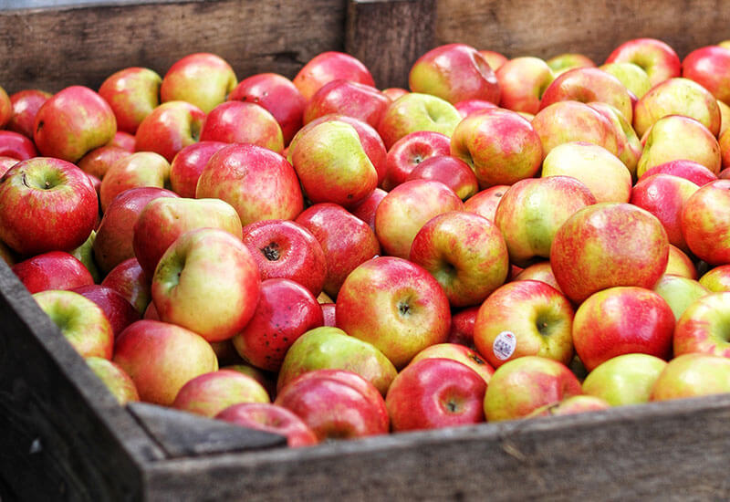 fall-guide-apples