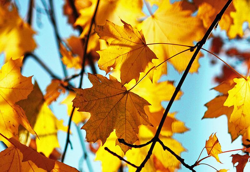 fall-guide-foliage